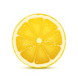 realistic of lemon slice vector image