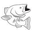 Sriped Bass fish vector image vector image
