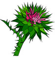 tight buds of a flower burdock vector image