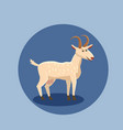 goat funny cartoon style vector image