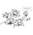 magnolia flower drawing vector image vector image