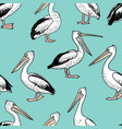 pattern of the cartoon pelicans vector image vector image