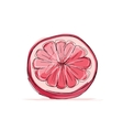 Sketch of grapefruit for your design vector image vector image
