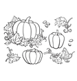 Pumpkin drawing set Isolated outline vector image