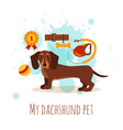 dachshund care infographic concept with dog vector image vector image
