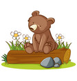 isolated picture grizzly bear on log vector image vector image