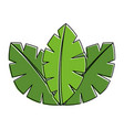 tropical leaves of palm tree flora image vector image vector image