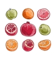 Set of fruits sketch for your design vector image