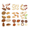 cartoon set nuts all types edible nuts vector image vector image