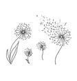 hand drawn sketch of dandelion flower vector image vector image
