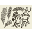 set with Christmas plants vector image vector image
