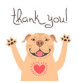 cute pitbull dog says thank you american vector image