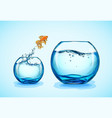 goldfish jumping from small fishbowl to bigger vector image