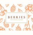 hand drawn berries card abstract vector image vector image