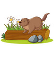 isolated picture groundhog on log vector image vector image