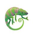 chameleon icon cartoon green lizard pet vector image