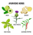 holy basil cayenne pepper milk thistle ginger vector image vector image