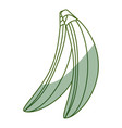 isolated two bananas fruit vector image vector image
