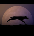 moon in the night silhouette black wild dog vector image