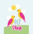 parrots birds cartoon animals lettering pet shop vector image vector image