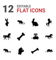 pet icons vector image vector image