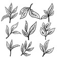 set hand drawn tea leaves design element vector image