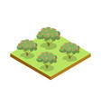 apple trees isometric 3d icon vector image vector image