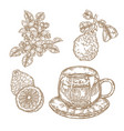 bergamot fruits flowers leaves and cup of tea vector image