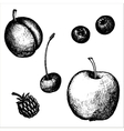 hand drawn fruits and berries vector image vector image