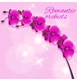 orchid with highlights vector image vector image