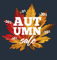 sale banner with colorful seasonal fall leaves vector image vector image