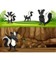 group skunk in nature vector image vector image