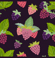 seamless pattern of raspberry vector image vector image