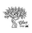 hand drawn olive tree i vector image