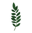 exotic botany leaf icon cartoon style vector image vector image