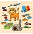 Infographics Domestic cats and all that is vector image