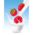 milk splash with raspberry vector image vector image