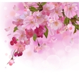 pink card with cherry branch flowers vector image vector image
