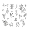 Plants and herbs icons set vector image vector image