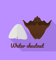 water chestnut icon flat style vector image vector image