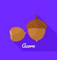 acorn icon flat style vector image