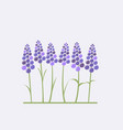 greeting card with stylized lavender vector image