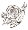 hand drawn rose floral design element outline for vector image