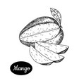 hand drawn sketch style fresh mango vector image vector image