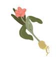 single flower leaf plant twig doodle clipart vector image vector image