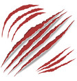 animal claws scratches vector image
