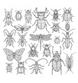 Insects hand drawn butterfly beetle and fly ant