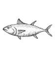 tuna fish hand drawn isolated icon vector image vector image