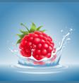 raspberry in water splash vector image