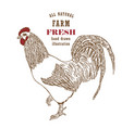 engraved chicken in sketch style vector image